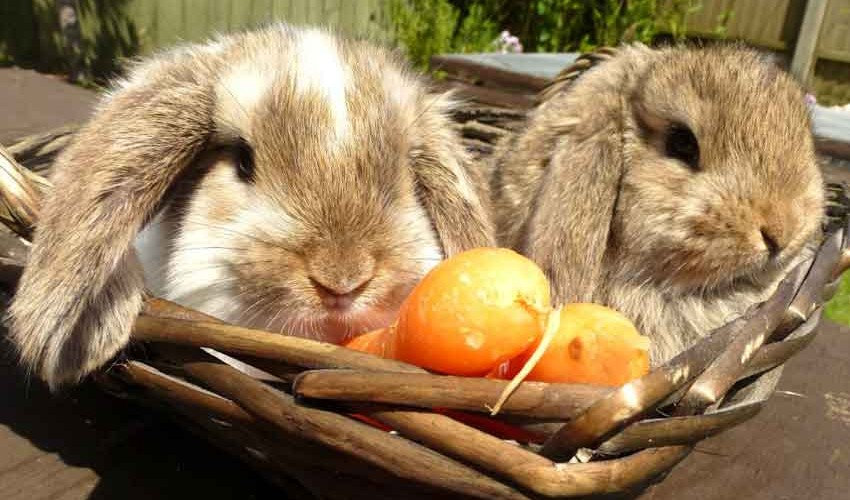 winterbourne-rabbits-rescue