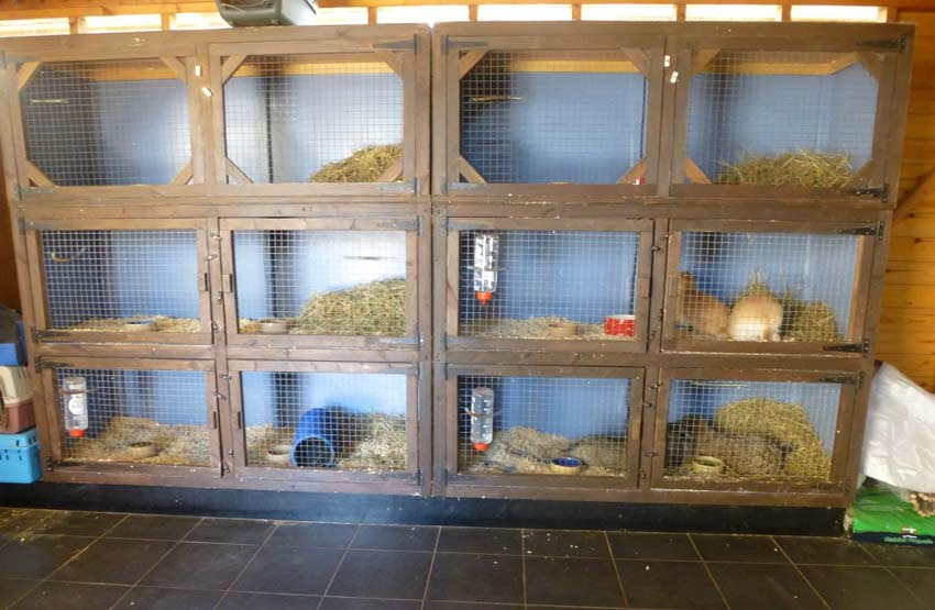 winterbourne rabbits holiday boarding for rabbits and guinea pigs