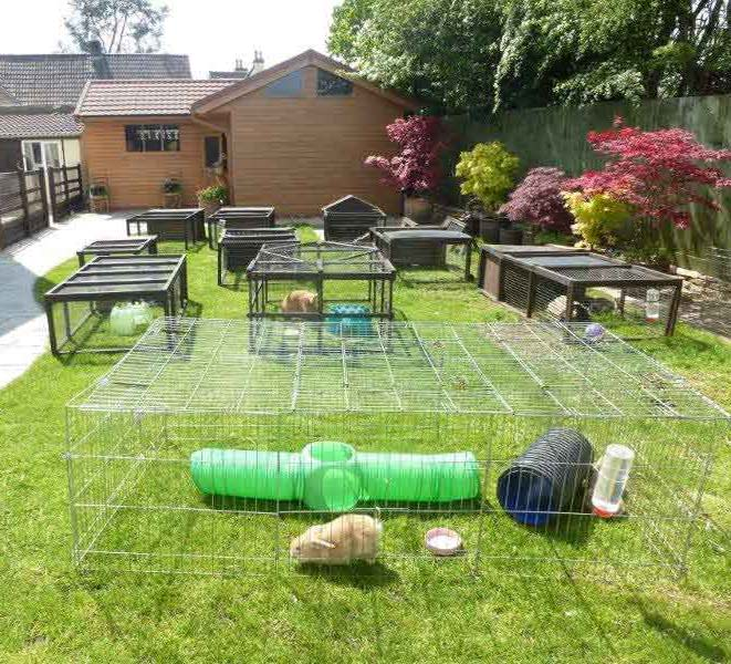 winterbourne rabbits holiday boarding